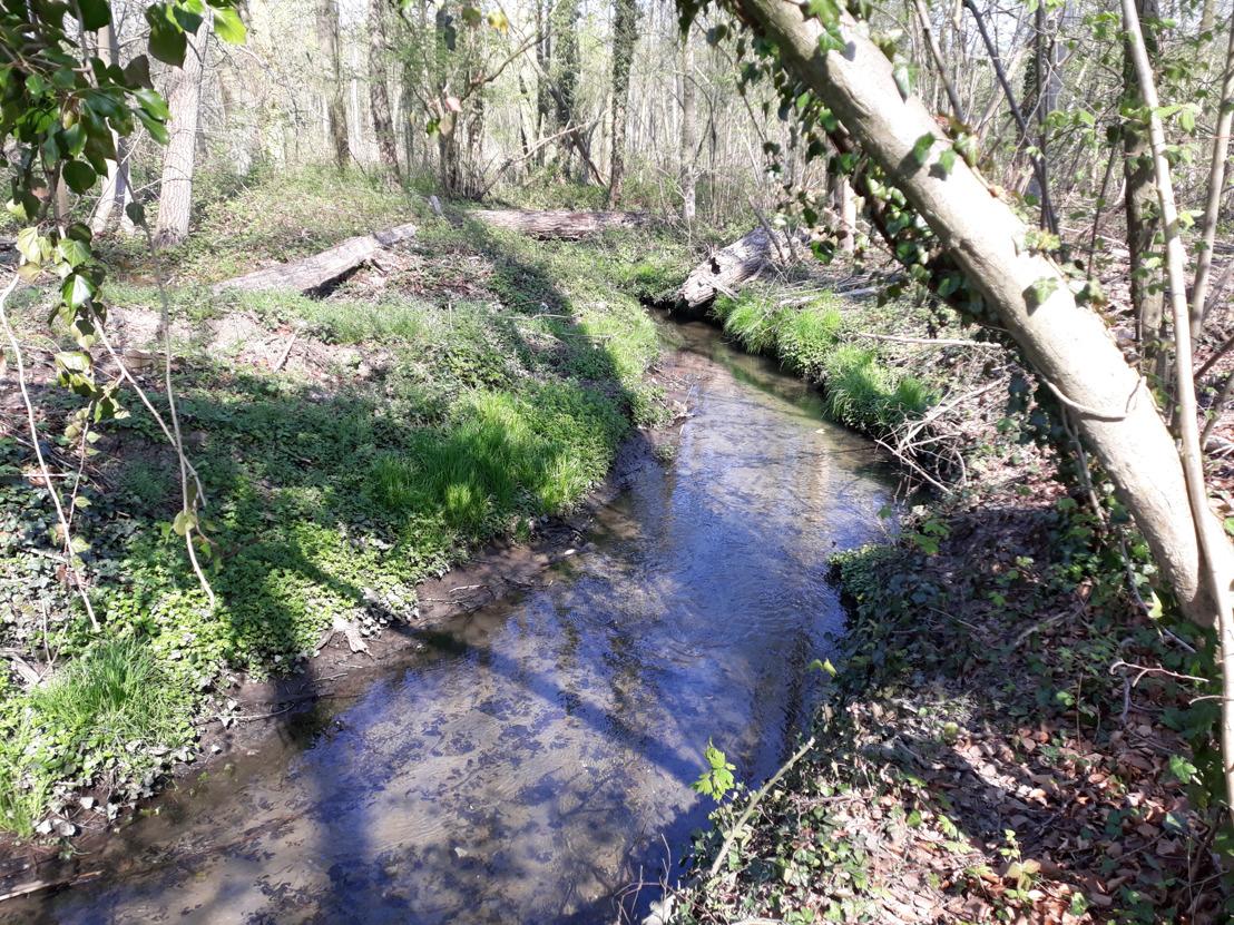 Kortenberg krijgt provinciale toelage voor hemelwaterplan