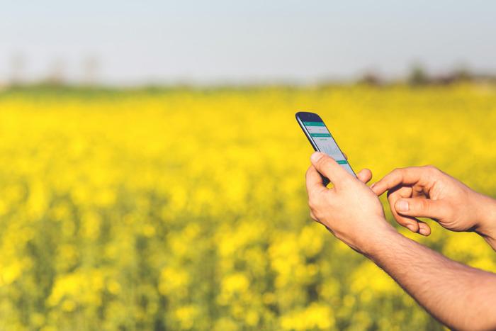 Alegra.com busca fortalecer la facturación electrónica para agricultores y ganaderos colombianos