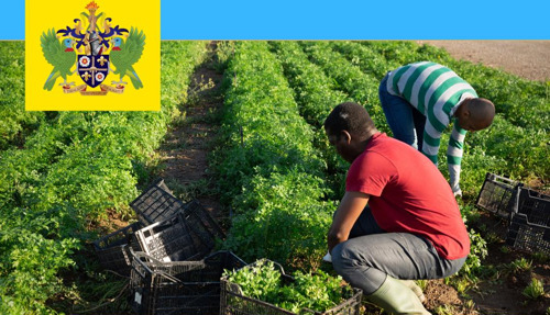 Saint Lucia helps 136 Stranded Agricultural Workers