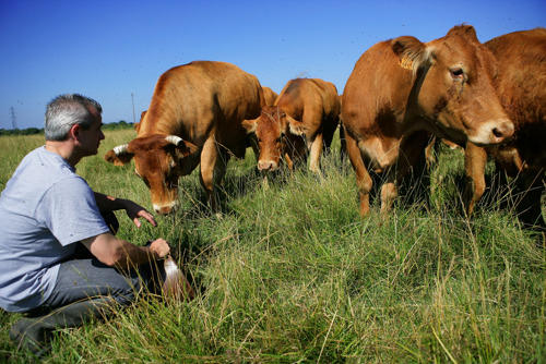 Producers, vendors and civil society mobilise to underpin value of sustainable livestock production