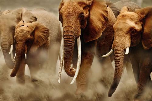 Wereld zet moedige stappen vooruit in de bescherming van wilde fauna