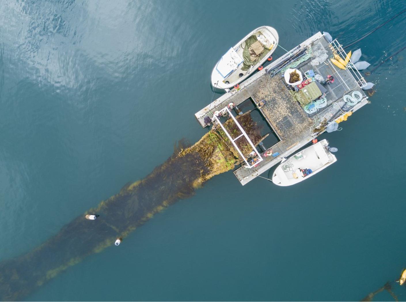 Norther facilite la première démonstration d'algues dans un parc éolien offshore
