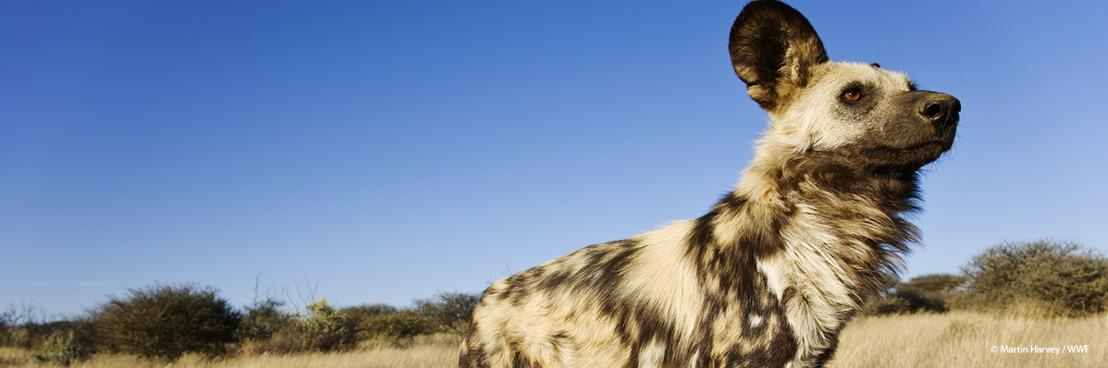 Klimaatverandering bedreigt de helft van alle planten- en diersoorten in de belangrijkste natuurgebieden ter wereld