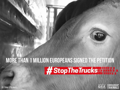 Over a million signatures against the long-distance transport of live animals