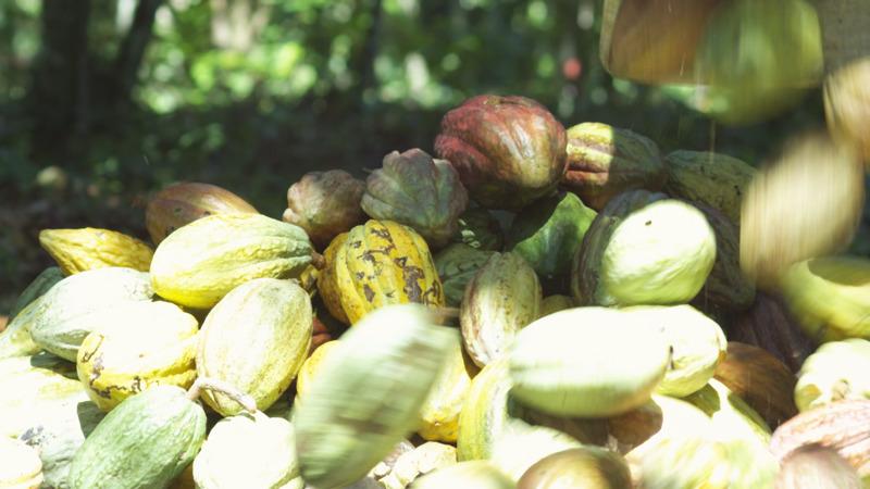 19-Saco-pila-de-cacao-copy.jpg