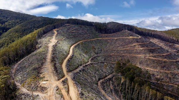 Preview: Illegal logging on Victoria's steep slopes putting lives at risk