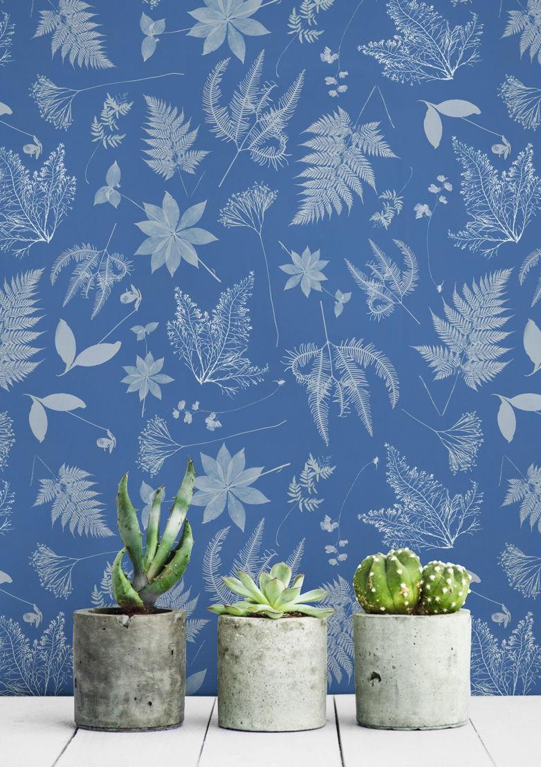Anna Atkins - The Botanist