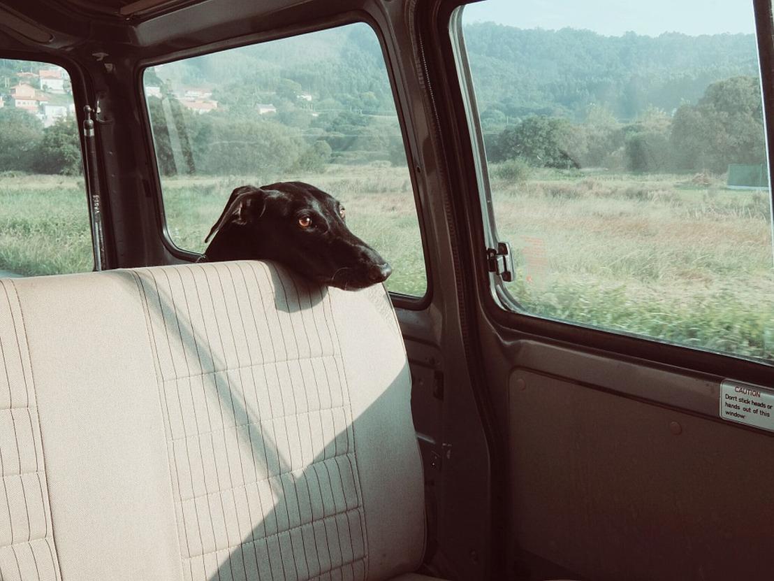 GAIA porte plainte contre la dame qui a laissé son chien mourir enfermé dans une voiture étouffante à Bruges