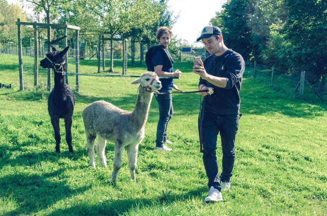 Op teambuilding met alpaca's