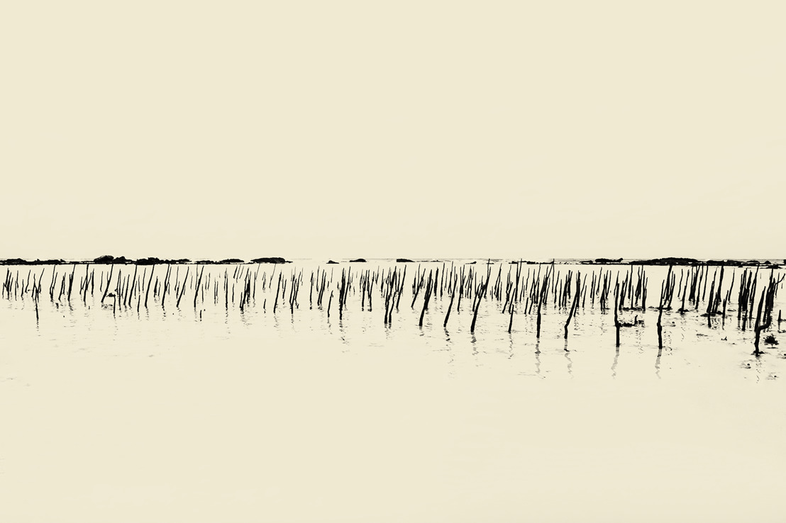Nederlandse fotograaf Paul Cupido stelt zijn efemere, poëtische beelden tentoon bij IBASHO