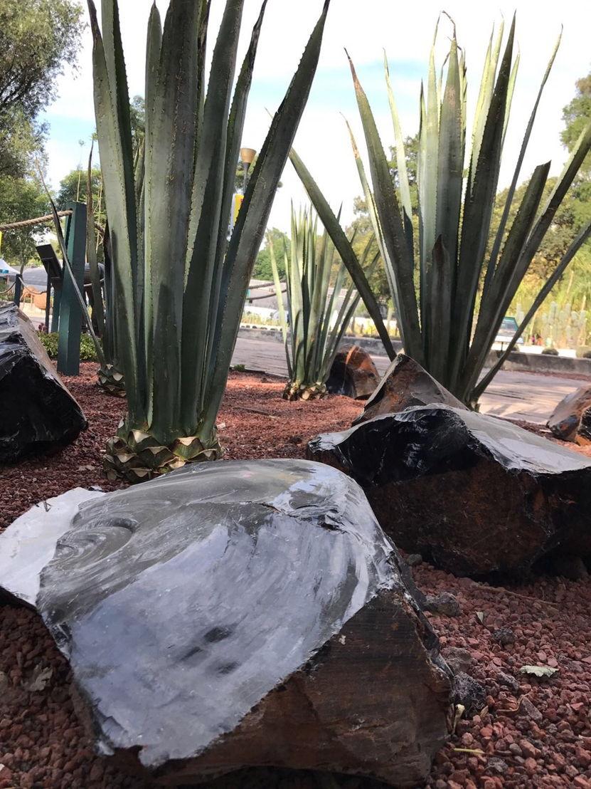 Campos de los Dragones, Jardín Botánico de Chapultepec