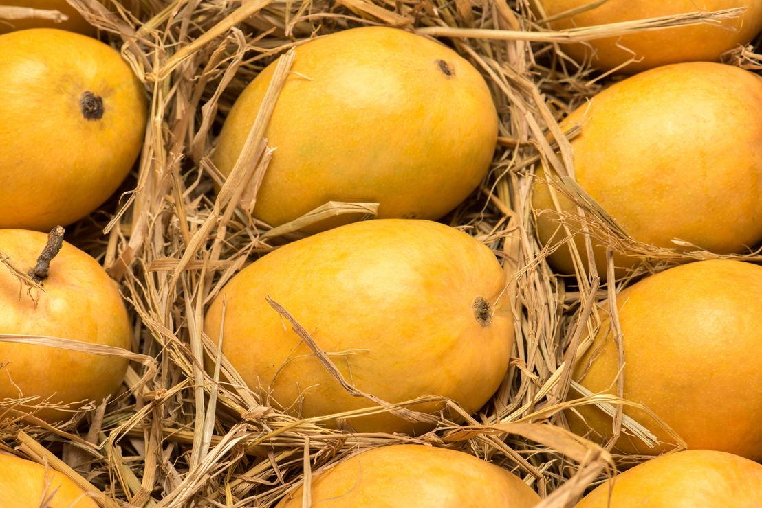 Emirates SkyCargo uplifts record volumes of mangoes from Mumbai