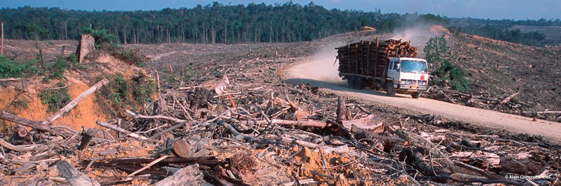 Europarlementariërs gaan voor energie-efficiëntie en klimaatbeleid, maar kiezen het foute pad op biomassa