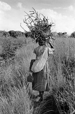 Emakhaya carrying firewood