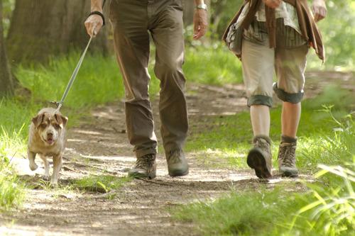 """Boswachters lanceren oproep om honden aan de leiband te houden: """"Een loslopende hond brengt zichzelf, anderen en de natuur in gevaar"""""""
