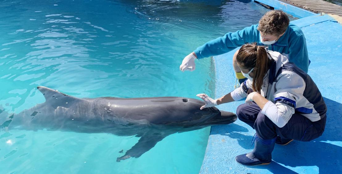 Cuidadores de cuarentena: cómo se garantiza el bienestar animal durante la pandemia