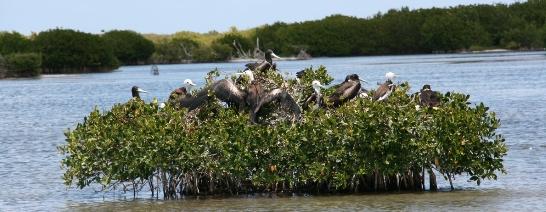 Codrington Lagoon National Park, Antigua & Barbuda