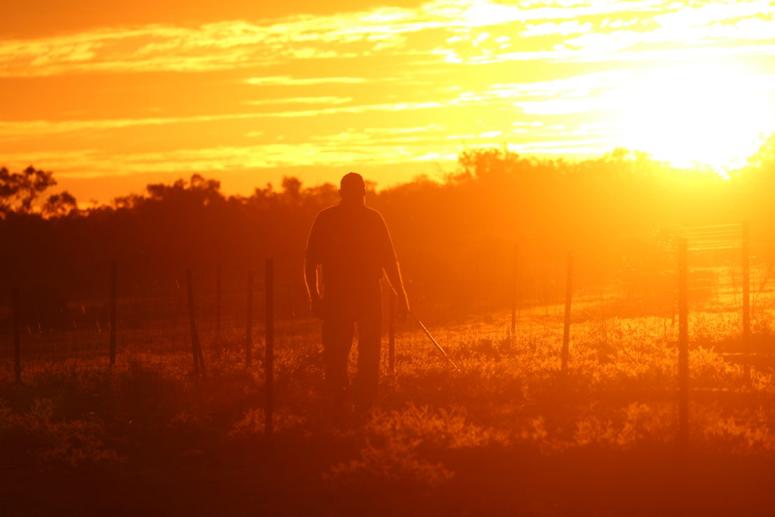 Farmer at sunrise