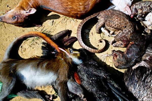 Preview: Coronavirus : le commerce d'animaux sauvages alimente le risque de pandémie, selon le WWF