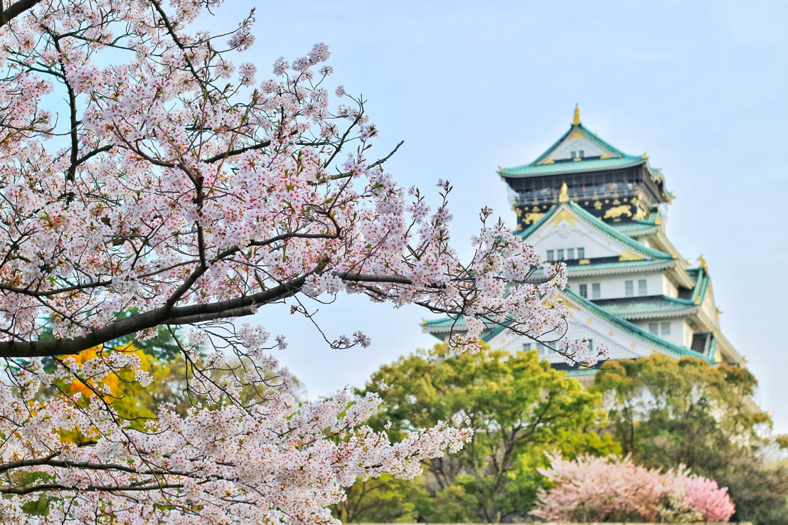 Los preciosos campos japoneses de flores de cerezos se transformaron en increíbles ejemplares G-SHOCK