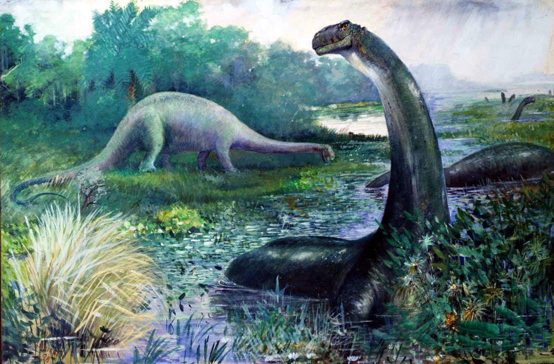 Apatosaurus, (Brontosaurus) by Charles R. Knight, 1898, American Museum of Natural History