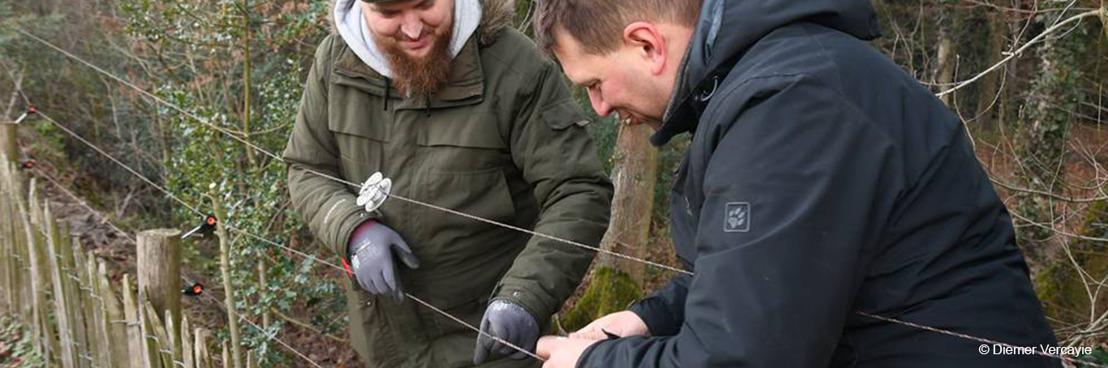 'Wolf Fencing Team' krijgt toenemend aantal vragen van veehouders: meer vrijwilligers zijn nodig