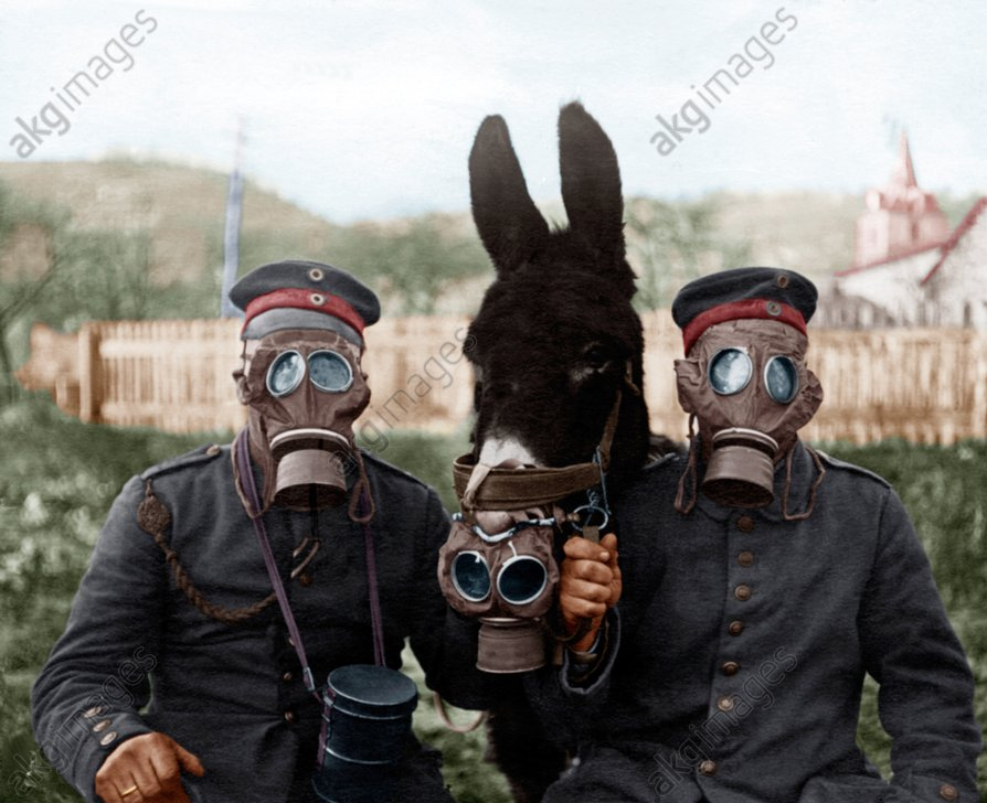 Soldiers and mule wearing gas masks during World War I on the Western Front. Photo, 1917<br/>AKG916822