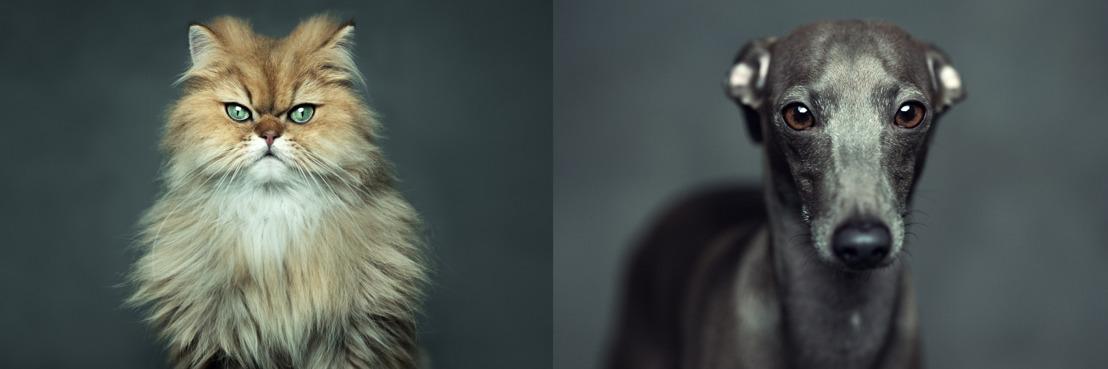 IKEA lance LURVIG, la collection pour chiens et chats que tout le monde attendait