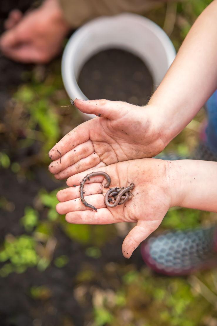 Pike Kid Series - Worms (photo credit Pike Nurseries)