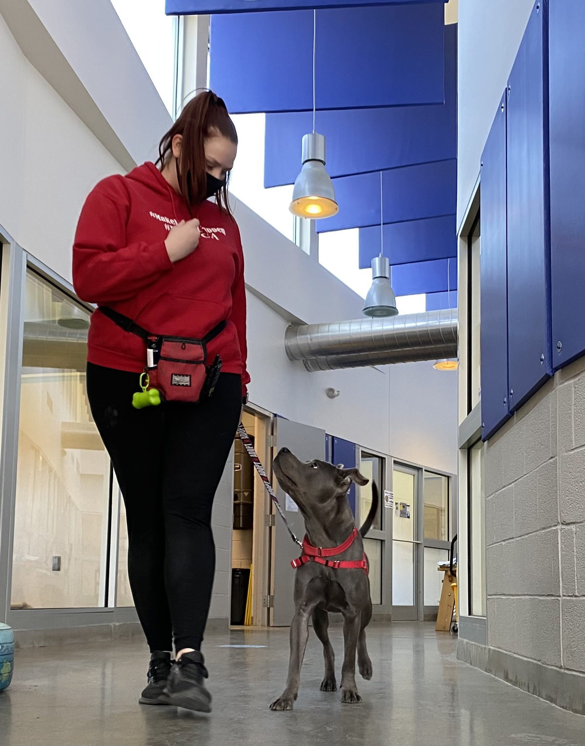 """Meloccaro says the change was instantaneous. """"Suddenly our biggest, most anxious dogs were walking calmly down the hall without fear,"""" she said. """"The difference was absolutely incredible."""""""