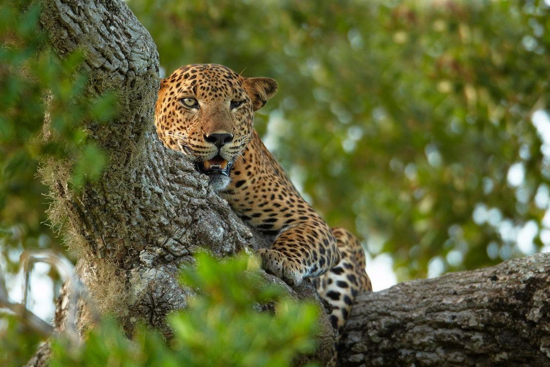 Sri Lanka_Yala National Park