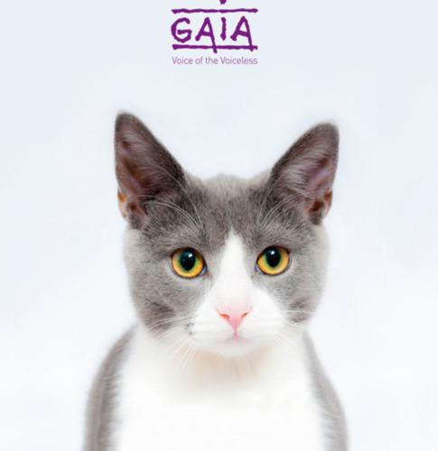 COMMUNIQUE DE PRESSE// La Chambre vote la réduction de la tva sur la stérilisation des chats