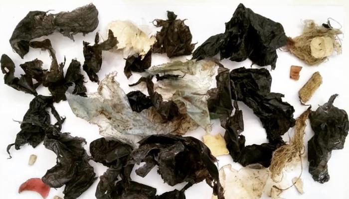 Preview: La imagen que muestra la alarmante cantidad de plástico que defecó una tortuga