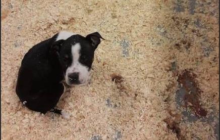 """GAIA: """"Puppyhandelaar Happy Doggy veroordeeld, maar geen gerechtigheid voor de puppy's"""""""
