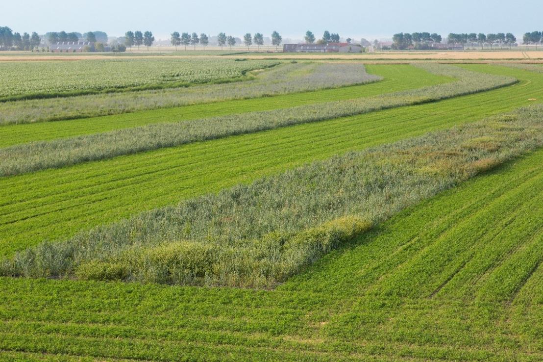 Soortenbescherming grauwe kiekendief op kruissnelheid: oppervlaktedoelstellingen in De Moeren al behaald