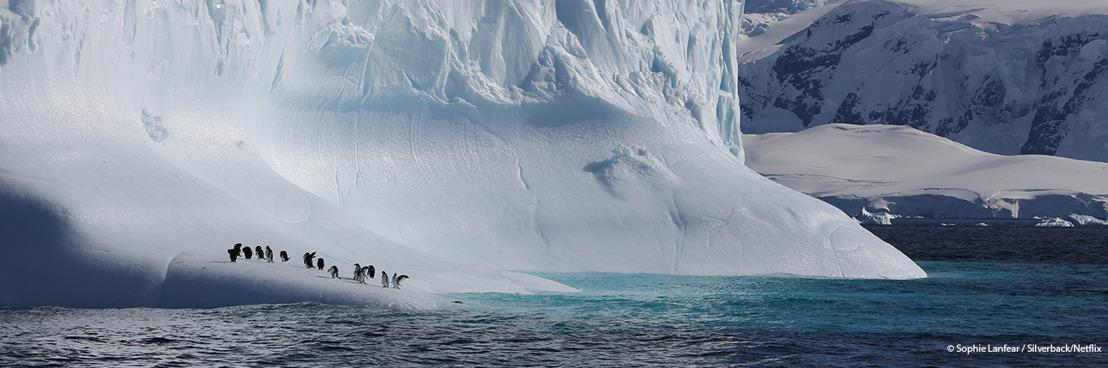Baanbrekende documentaire Our Planet benadrukt nood aan wereldwijde actie om natuur te beschermen, zegt WWF