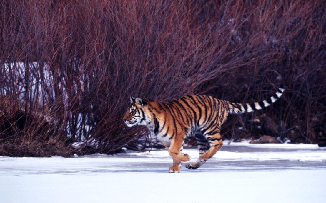 © Klein & Hubert / WWF