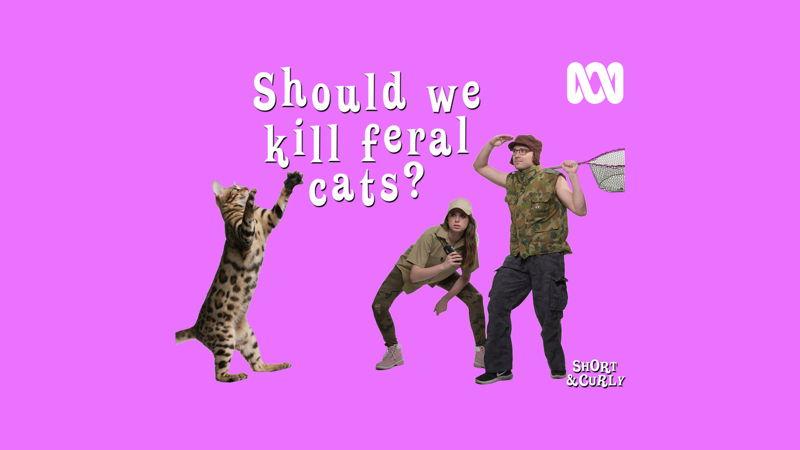 Should we kill feral cats? RC