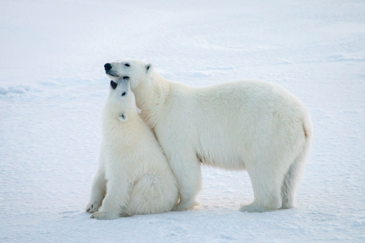 Friederike Krüger's students were most interested in polar bears   (© Jan Rohde)
