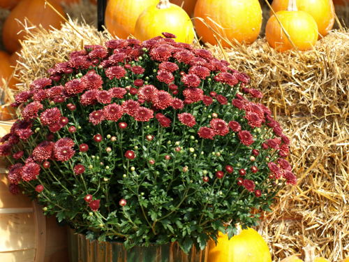 Preview: Pike Nurseries sails into October with slew of free gardening classes