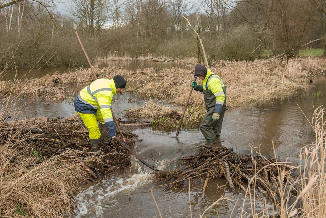 Werken aan Vijversbeek in Tremelo garanderen afvoer water en behoud beverdam