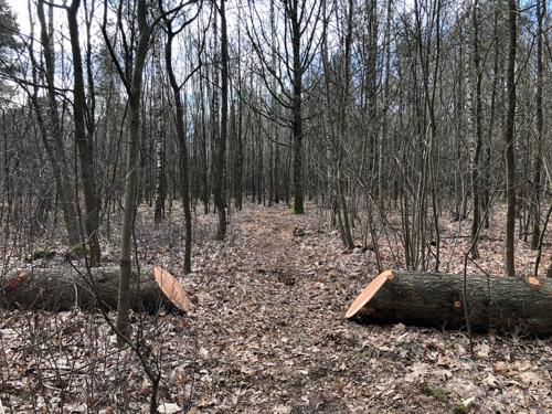 Ook Vlaanderen heeft zijn eerste natuuroases om in te bosbaden