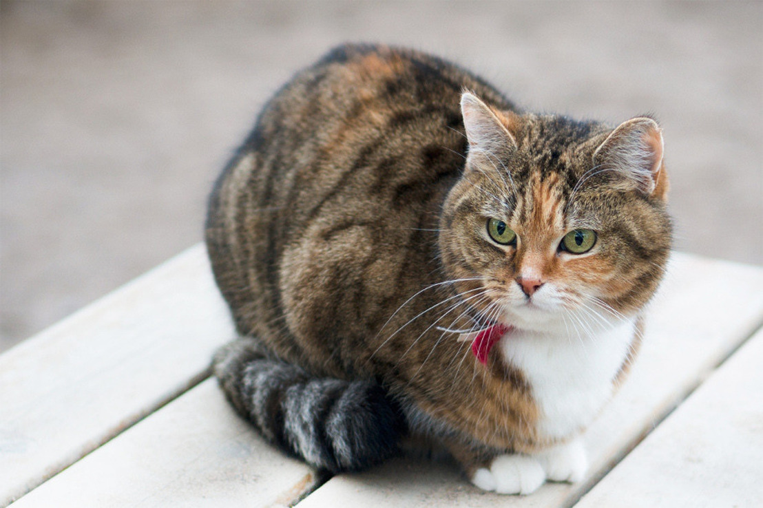 Neutering and spaying of cats will soon be mandatory in the Brussels Region