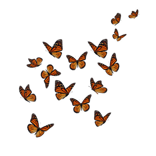 Monarch butterflies take flight at Coors Field