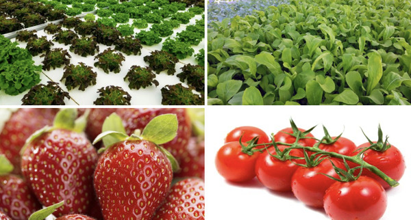 """Preview: These """"Island Growers"""" are Reducing Imports and Improving Regional Access to Affordable Fresh Food"""