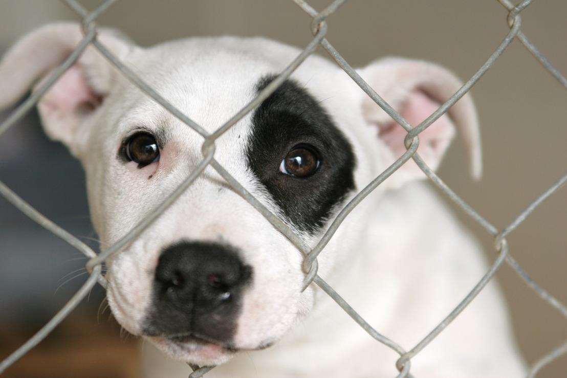 GAIA laakt administratieve blunder waardoor malafide puppyverkoper exportvergunning terugkrijgt