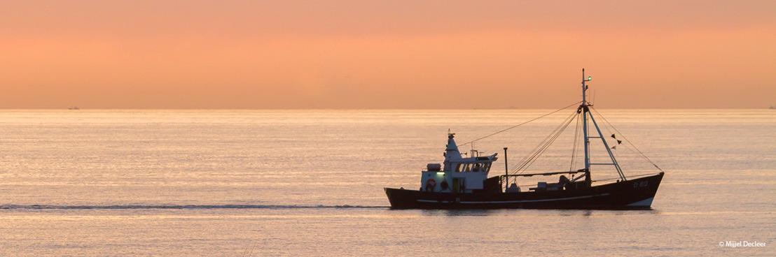 Plus d'espace pour la nature en mer du Nord : la nouvelle campagne du WWF