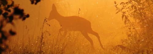 Loslopende hond bijt ree dood in Kruibeke