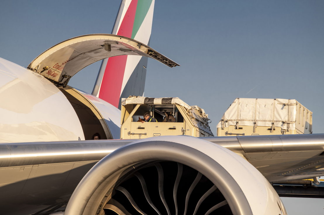 Emirates SkyCargo is no stranger to transporting horses on its freighter flights.<br/>Image courtesy: FEI/Dirk Caremans; FEI/Tori Repole