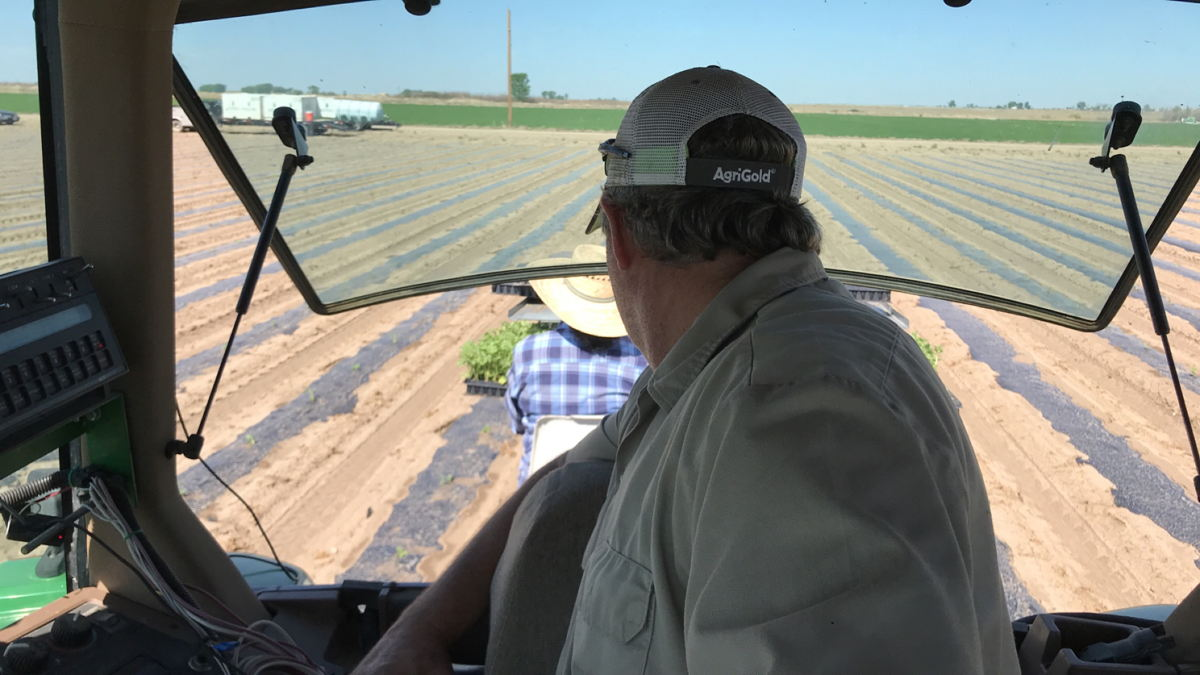 Matthew Proctor of Rocky Ford Growers Association member farm Proctor Produce and his crew plants melon seedlings recently in Rocky Ford, Colorado
